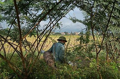 Ноември 2018 г., г-н Ти обикаля земеделските райони на Куанг Нин в търсене на плъхове.