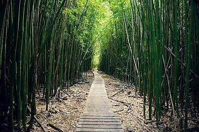 Пътеката ПипиуайОтрупан с папрати, осеян с водопади и приятни места за хапване емблематичният път към Хана си струва да бъде изминат. Прекарайте повеч...
