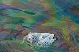 Години ще минат, преди да се разбере какви са последиците от нефтения разлив за дивите животни в района.
