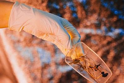 Клаудия Кобалд държи кълнове, отгледани в Hortextreme. Поради огромното разстояние от Земята, бъдещите астронавти на Марс ще трябва да отглеждат собст...