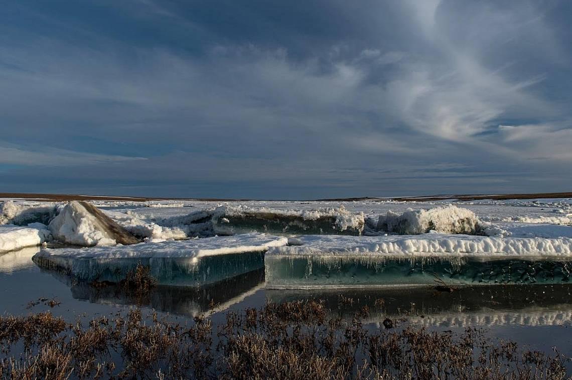 Една от най-големите защитени територии на земята, обхващаща около 26000 квадратни километра в северната част на Русия, Големият арктически резерват е...
