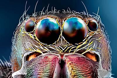 Очите на буболечките