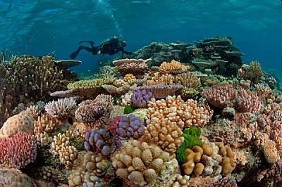 """""""За мен рифовете са място за усамотение и размишление - казва австралийският морски биолог Чарли Верън, който тук се възхищава на..."""
