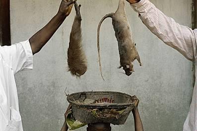 Момиченце на път за пазара в едно селце в Демократична република Конго носи кошница с гамбийски хомяковиден плъх, маймунска ръка - и може би смъртонос...