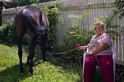 Днес този кротко пасящ кон с нищо не напомня за опустошението, развихрило се преди повече от десетилетие, когато вирусът хендра убил 13 коня близо до...