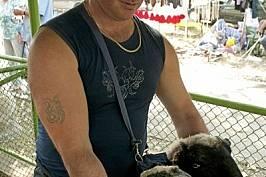 На провежданите национални изложения по животновъдство - като това край Сливен през октомври 2011 г. - се представят и местни породи. Собст...