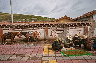 Всеки ден по време на събиране на реколтата тибетски продавачи пристигат в Сершу със своите купчинки червеи. Горе те ги изсушават на една о...