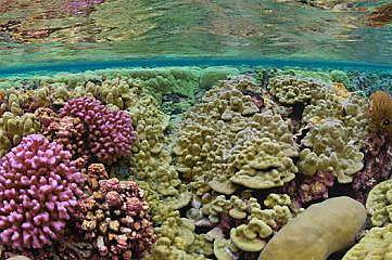 Рифът Кингман