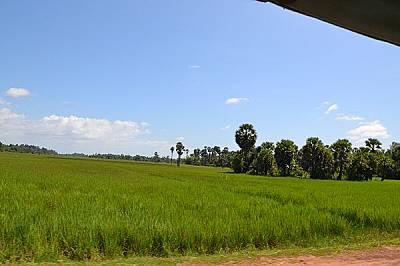 Прекрасната природа на Камбоджа заобикаля отделните храмове.