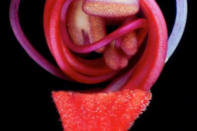 Чудили ли сте се някога какво се крие под венчелистчетата на цъфнала пъпка? Хосе Алмодовар, биолог от Университета на Пуерто Рико, изобразява това при...