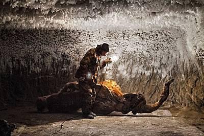 Преди няколко години ловци на бивници от с. Юкагир открили в ледения бряг това рижо мамутче, което нарекли Юка. С умножаването на ловците се ускоряват...