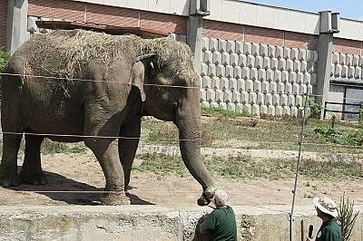 Животът на животните в столичния зоопарк