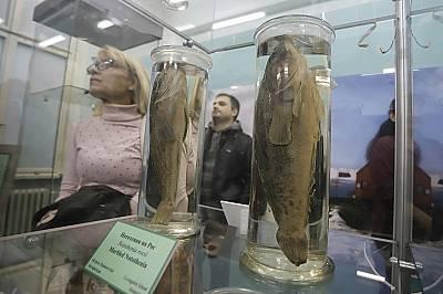 Изложба показва уникални морски видове от Антарктида