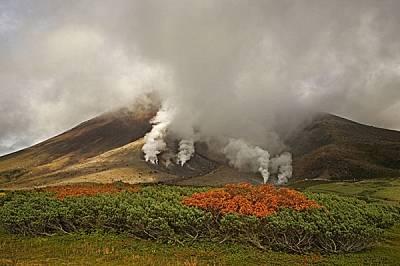 Червени планински офики сред храсти от пълзящ клек в подножието на вулкана Асахи Даке.