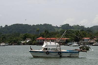 Пеликани лениво се припичат на слънце, кацнали върху рибарските лодки в заливчето.