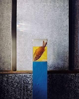 В историческия музей в Арал, Казахстан, е изложена препарирана платика – един от няколкото вида, изчезнали през 80-те, когато Аралско море...
