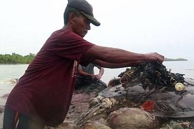 Намериха мъртъв кашалот с 6 килограма пластмаса в стомаха