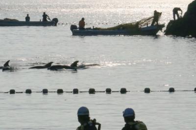 Започна противоречивият ежегоден лов на делфини в Япония