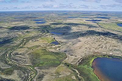 Безкрайната плетеница от мочурища, реки и езера на западносибирската тундра е единственото място, където гнездят червеногушите гъски. Всеки се...