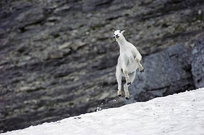 Високо скачащи животни
