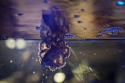 Най-отровният октопод в света обитава аквариум в Природонаучния музей в Пловдив