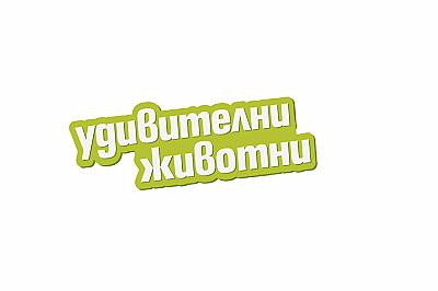 Речник на котешкия език