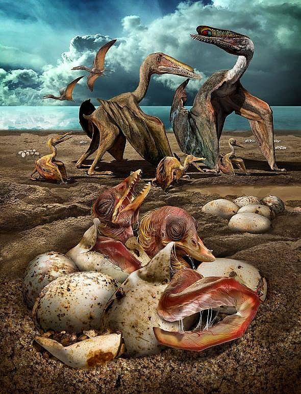 Реконструкция на Hamipterus tianshanensis – вид птерозавър, който е обитавал земите на днешен Китай преди повече от сто милиона години.  Илюстрация:...