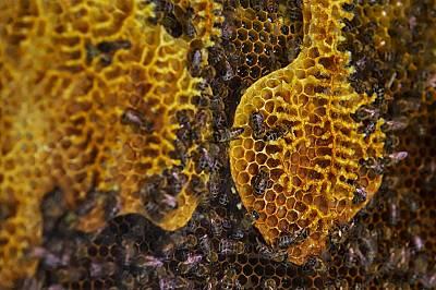 Пестицидите и болестите – основни проблеми за оцеляването на пчелите