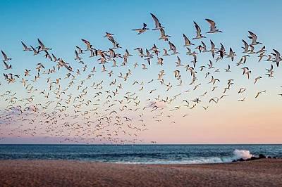 Кейп Мей, Ню ДжърсиТесният полуостров Кейп Мей привлича пойните птици по време на пролетните и есенните им миграции. Тук могат да се видят над 20 вида...