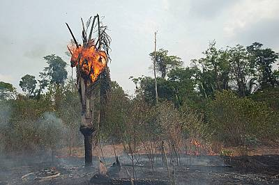 Горските пожари в Боливия са изпепелили повече от 4 млн. хектара гора