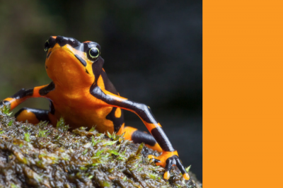 Как биоиндикаторите помагат за опазването на околната среда?