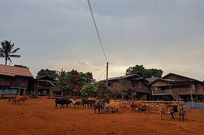 Центърът на селцето Бан Кок Пунг Тай