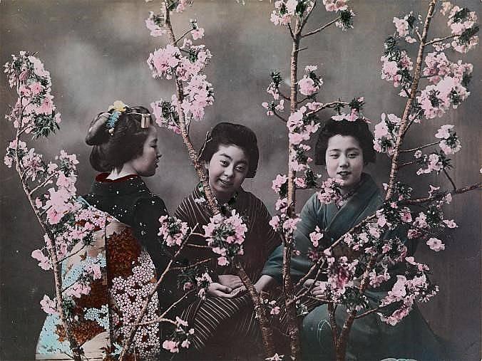 Момичета позират зад цъфнали вишни в Япония, около 1918 г.