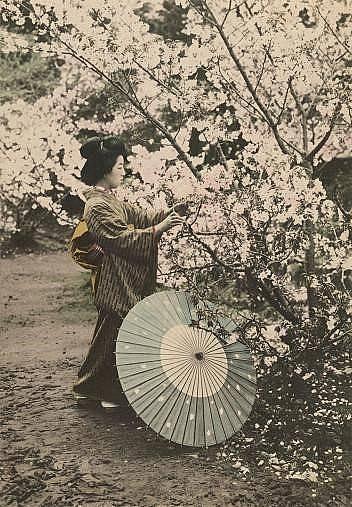 Жена бере вишнев цвят. Снимката е била включена в статия на National Geographic от 1922 г., посветена на Япония.
