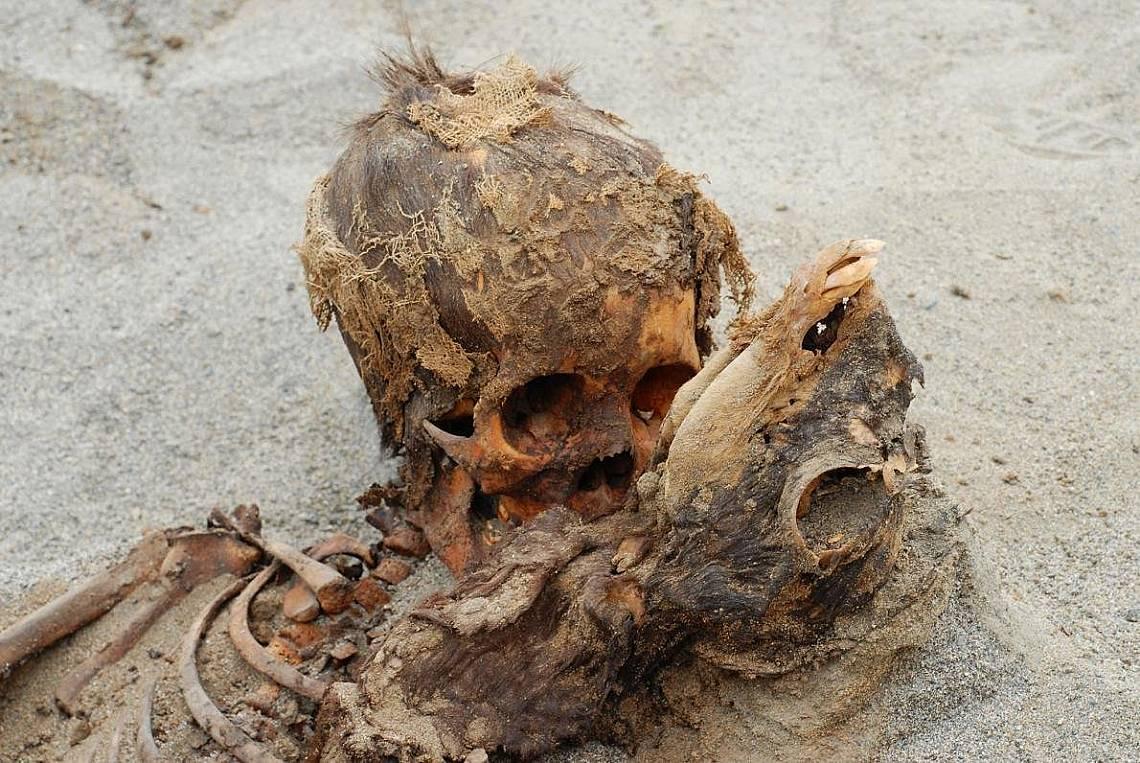 Жертвите: дете (вляво) и лама (вдясно) са били част от ритуално убийство на над 140 деца и над 200 лами на северното крайбрежиe на Перу около 1450 г.....