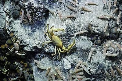 Трите отвора са пълни с раци, скариди и други форми на живот, в това число и нови за науката видове.