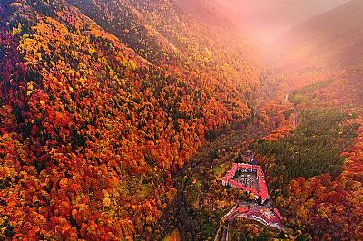 Великата българска гора