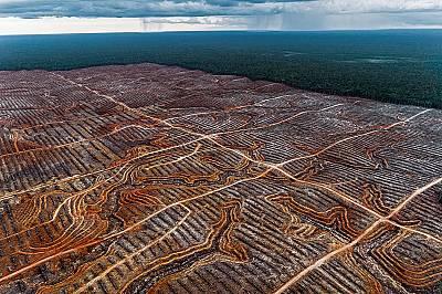Кризата с палмовото масло