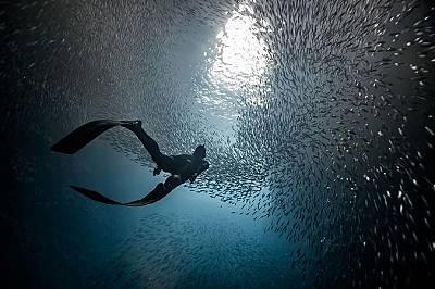 Гмуркач в пещера Суолоус, ТонгаТази пещера се обитава от хиляди риби. Заради контраста между тъмното дъно и светлината отгоре рибите приличат на звезд...