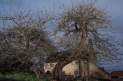 Неочакваното прозрение все пак изисква и малко размисъл. След като видял вертикално падаща на земята ябълка през 1666 г., Исак Нютон съобразил, че по...