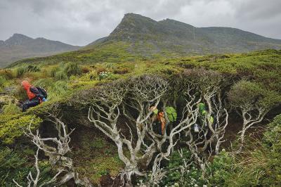 Дървото накрай света