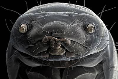 Увеличеното лице на брашнения червей с изразителни очи и уста.Брашнените червеи често се използват за храна на влечуги, риби и птици, тъй като са изкл...