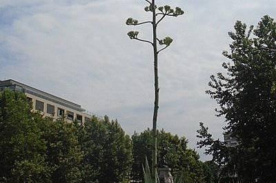 В Хасково разцъфна уникално растение