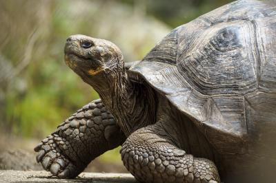 В търсене на още гигантски костенурки