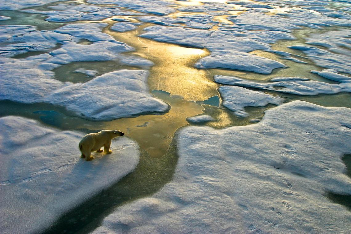 Полярна мечка, близо до Земята на Франц Йосиф (архипелаг в Северния ледовит океан).
