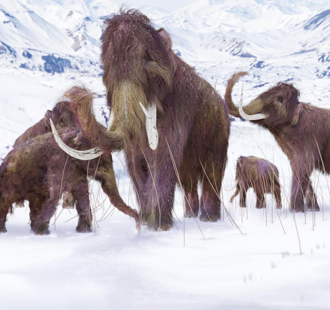 Илюстрация на стадо вълнести мамути в сцена от ледников период.