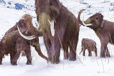 Генетични мутации погубили мамутите