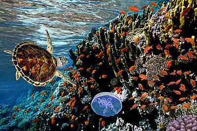 Международен ден на биоразнообразието