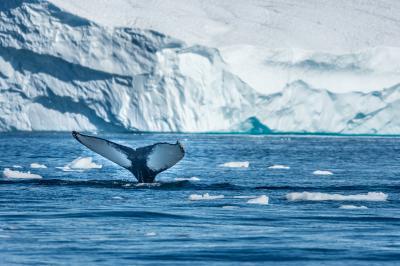 Колко бързо топенето на Гренландия нарушава баланса в океана?