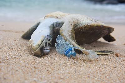 Костенурки умират след консумация на пластмаса